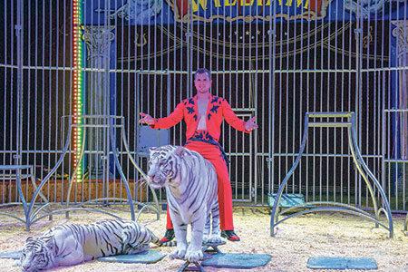 Hurra: Der Zirkus ist in der Stadt