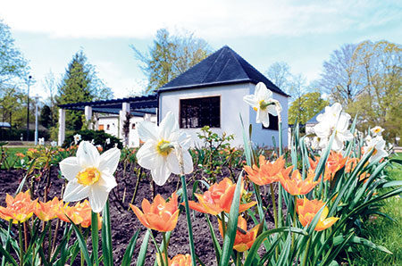 Forst: Rosengarten startet blühend in Saison