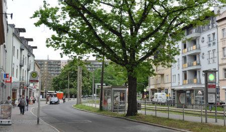 Cottbus: Alles ist zu Fuß zu erreichen