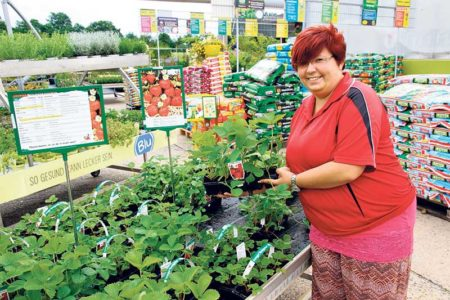 Cottbus: Erdbeersaison 2018 beginnt