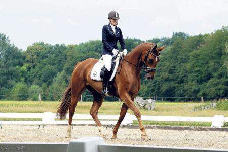 Gallinchen: Ross und Reiter erleben