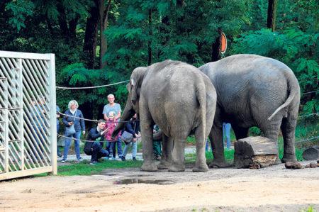 Cottbus: Viele Streicheleinheiten beim Tierpatentag
