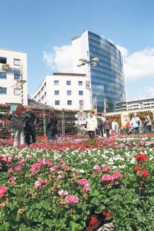 Blütenpracht in Cottbus