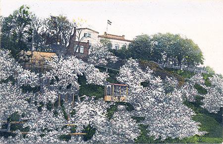 Die Baumblüte zog Gäste nach Guben