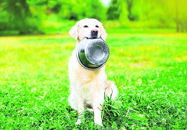 Rohfütterung liegt bei Hunden im Trend