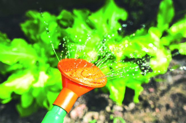 Auch die Grabbepflanzung durstet