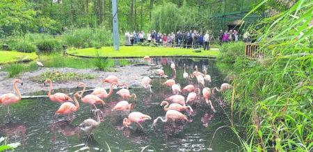 Cottbuser sind begeistert vom Flamingo-Paradies