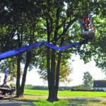 Ratgeber: Bäume auf neue Saison vorbereiten