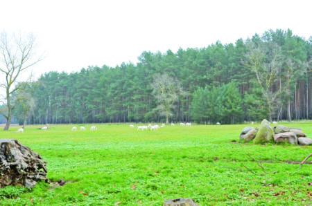 Land & Leute: Von Cottbus geht es nach Westen zu lohnenden Ausflugszielen
