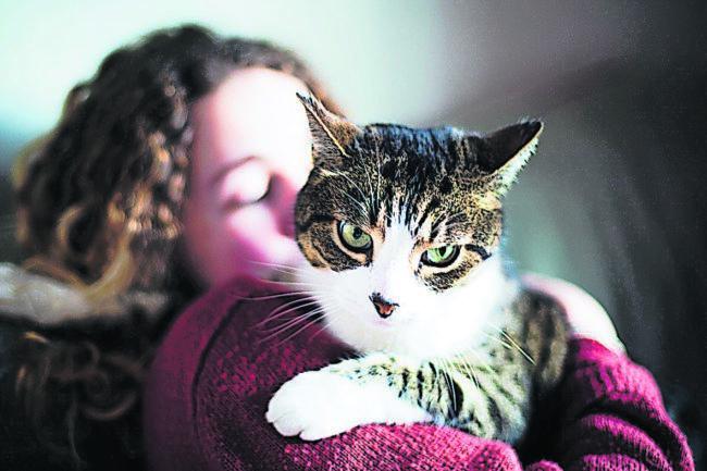 Ratgeber: Tipps für einen entspannten Jahreswechsel für Haustiere