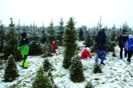 Weihnachtsbaumverkauf der Dubrauer Baumschule