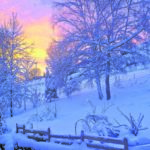 Ratgeber: Gartenarbeit im Januar