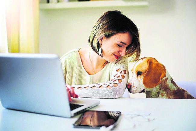 Ratgeber Tier: Tierpension oder Hundesitter?