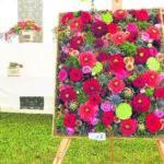 Bühne für wilde Blumen beim Branitzer Gartenfestival 2019