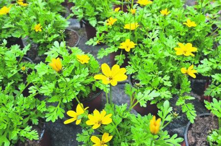 Blumen für die Biene
