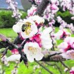Eine Welt ohne Bienen ist undenkbar