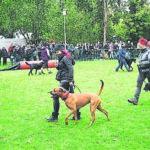 100 Jahre Hundesport in Kolkwitz
