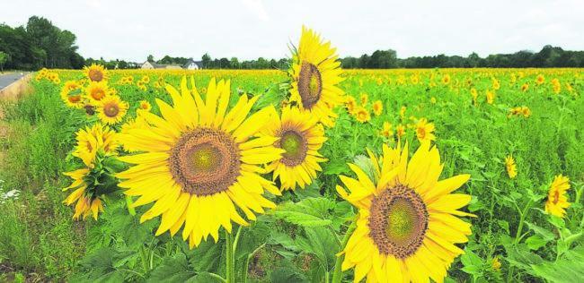 Land und Leute: Auf Sonnentour rund um Kolkwitz