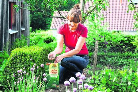 Ratgeber Garten: Buchsbaum schützen