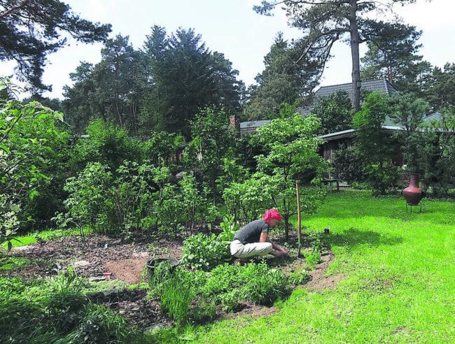 Ratgeber Garten: Verdunstung vorbeugen