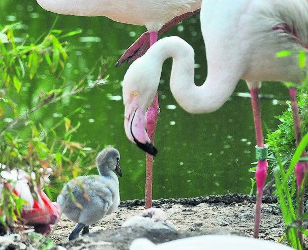 Im Cottbuser Tierpark meldet sich Nachwuchs