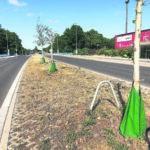 Heimische Bäume und Sträucher unterstützen