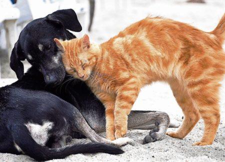 Region: Besuch beim Tierarzt