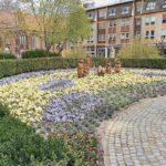 Rückkehr Cottbuser Blumenuhr im Mai