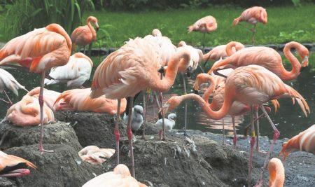 Nachwuchs im Cottbuser Tierpark