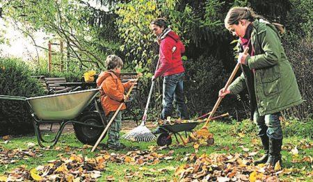 Pflege für den Rasen im Herbst