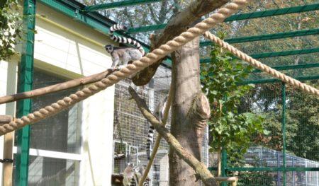Neues Affengehege für Senftenberger Tierpark