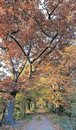 Nach dem Blätterregen