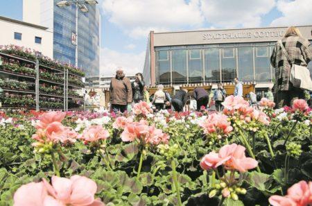 Es ist Pflanzzeit: Den Frühling nachHause holen