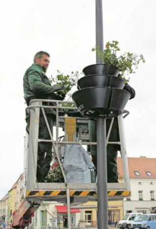 Frühlingsanbruch in Senftenberg