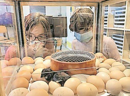 Eierbrüten in Forster Grundschule
