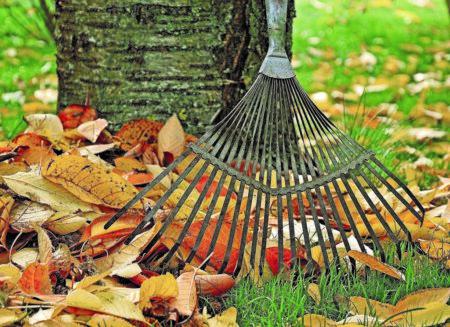 Herbstzeit ist Pflanzzeit