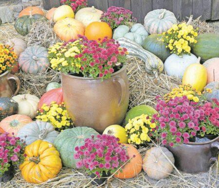 Das Niederlausitzer Heidemuseum lädt ein zum 18. Herbstfest